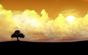 674378-alone-tree